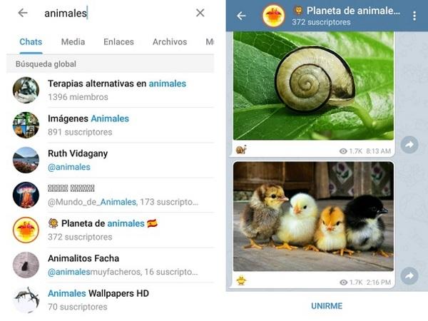 Cómo-encontrar-canales-y-grupos-de-Telegram-desde-la-misma-aplicación