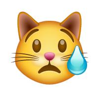 Gato sudando